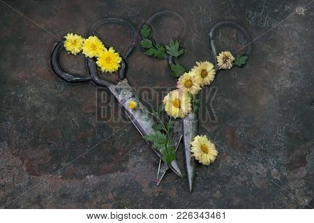 Two Pairs Of Old Metal Bulky Scissors Lie On A Rusty Background And Are Twisted With Green Leaves An