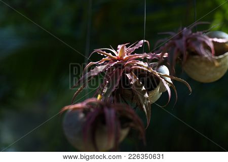 Small Red Plant In Hanging Flowerpot