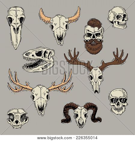 Skulls Vector Boned Head Of Animals Of Bull Goat Or Sheep And Human Skull With Beard For Barbershop