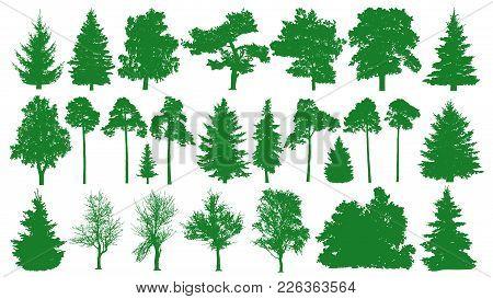 Green Trees Set. White Background. Silhouette Of A Coniferous Forest. Fir-tree, Fir, Pine, Birch, Oa