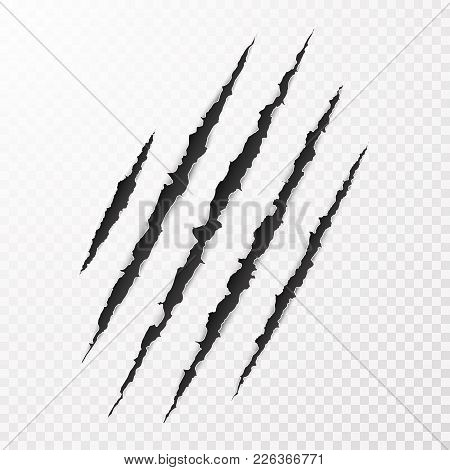 Scary Leceration Paper Surface. Wild Animal Claws Scratch Texture. Torn Paper Edge. Isolated Vector