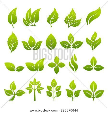 Illustrations Of Stylized Plants To Design Logos. Vector Leaf Green, Natural Organic Bio And Eco