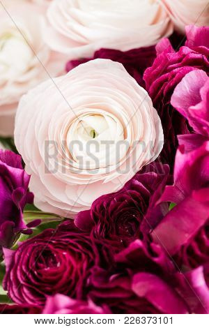 Persian Buttercup. Bunch Colorful And Pale Pink Ranunculus Flowers Light Background. Glass Vase On P