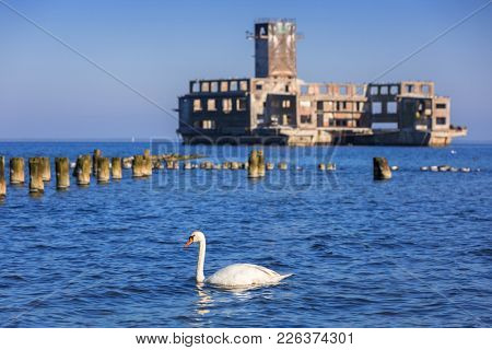 Swans on the sea at world war II torpedo platform in Poland