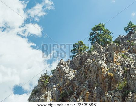 Pine Trees On Cliff Edge. Scenic Landscape With Steep Cliffs And Trees During A Sunny Day.