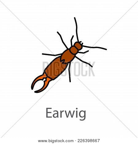 Earwig Color Icon. Insect. Isolated Vector Illustration