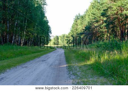 View On The Country Road In The Wood