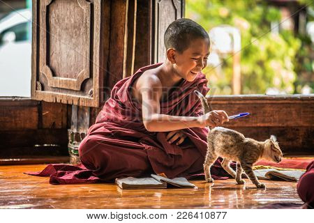 Nyaung Shwe, Myanmar - January 28, 2016 : Southeast Asian Child Monk Gets Distracted By A Cat From L
