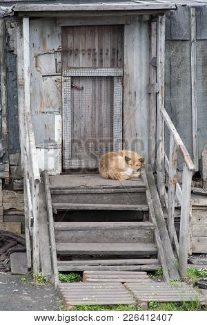 The Dog Lies On A Porch Of The Old House
