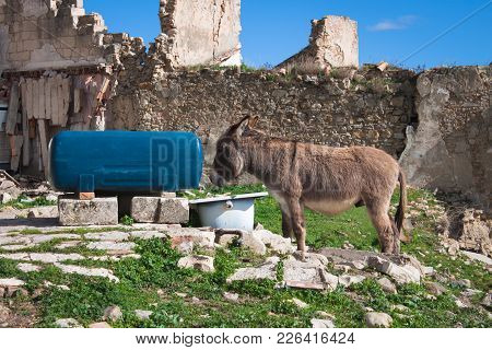Livestock. Courtyard Of Domestic Animals With Stone Walls. Walking Donkey Next To The Water Tank.