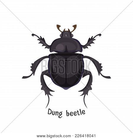 Black Dung Beetle That Has Strong Unpleasant Smell. Bug That Lives In Dirt And Collect It. Small Wei