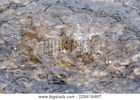 Water Splashes In A Puddle Of Rain .