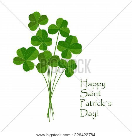 Green Clover Bouquet With Quarterfoil And Trefoilon Leaves On White Background. St Patrick Day Greet