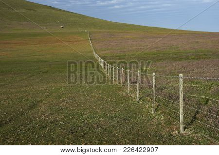 Fence Running Across Pasture On Carcass Island In The Falkland Islands.