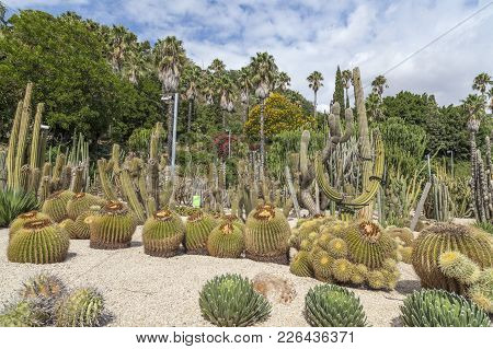 Gardens, Jardins Mossen Costa I Llobera, Botanical Garden, Great Collection Of Cacti And Succulent P