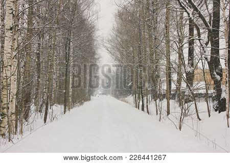 Winter Season Forest Landscape View Train Rail Road Tracks Covered In Snow. Outdoor Nature Of Rural