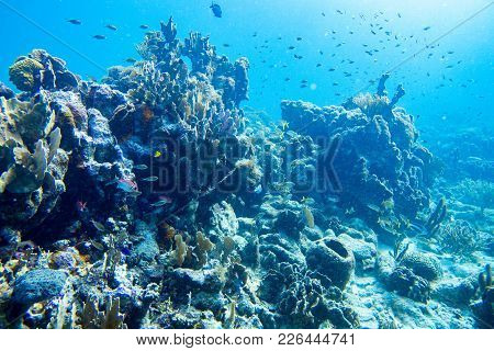 Hard Coral, Brain Coral And Soft Coral All Appears In This Underwater Landscape.