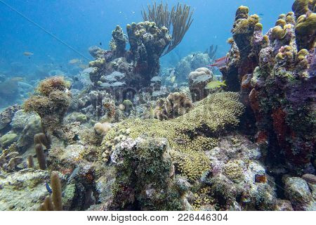 Underwater Landscape With Coral Reef, Soft And Hard Coral Also Fish.