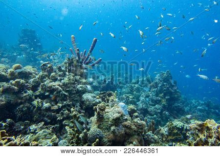 Coral Reef Multitude Image Photo Free Trial Bigstock