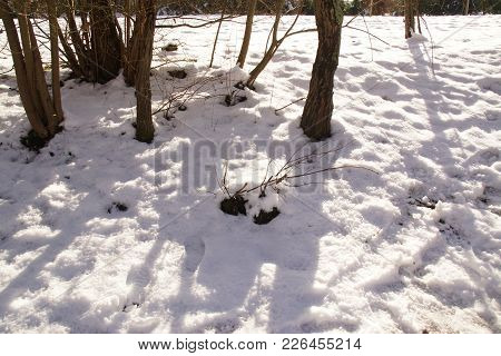 Landscape wintry. Trees are completely surrounded and covered with snow. On the ground we perceive o