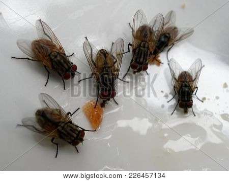 A Group Of House Fly On Bread Over White Plate Show Concept Of Contamination, Infection, Disease, An