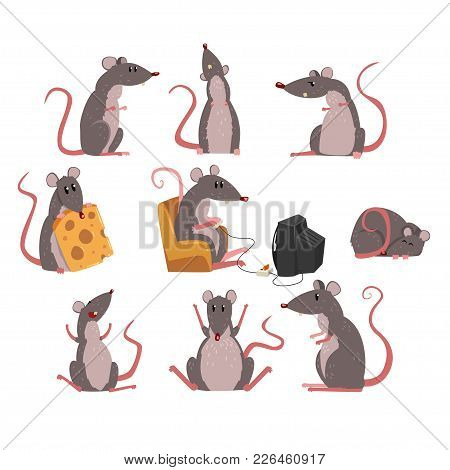 Cute Grey Mouse Set, Funny Rodent Character In Different Situations Vector Illustrations On A White