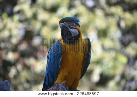 Beautiful Capture Of A Blue And Yellow Parrot.