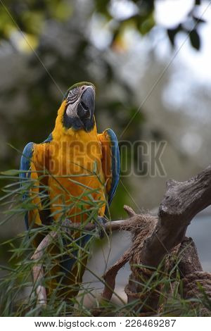 Blue And Gold Macaw Sitting On A Tree Branch.