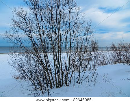Beautiful View Of The Snow-covered Beach Of The Gulf Of Riga In Winter. Latvia 2017 Year.