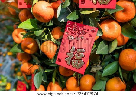 Spring festival Chinese New Year Red envelope decoration on orange tree,translation:calligraphy mean best wishes for chinese new year
