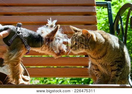 The Cat And Dog Stare At Each Other On A Bench In The Summer Park