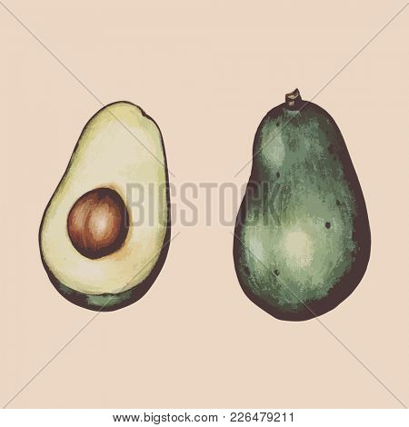 Hand drawn of avocado