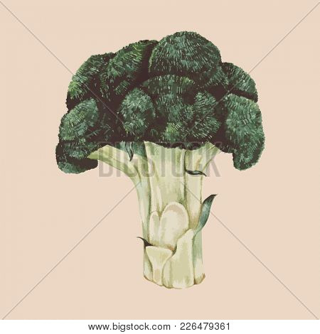 Illustration of broccoli