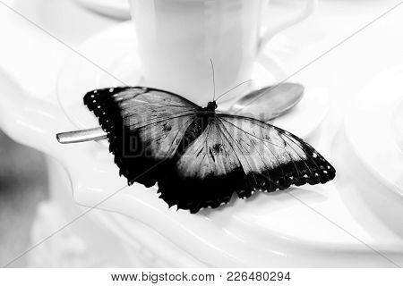 A Butterfly Is Placed On A Cup Of Porcelain For Tea. The Dark Open Wings Accentuate The Contrast Wit
