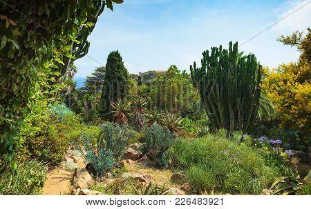 Botanical Garden On Mediterranean Coast Of Spain , Blanes.