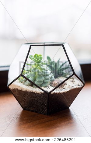 Mini Succulent Garden In Glass Terrarium On Wooden Windowsill. Succulents With Sand And Rocks In Gla