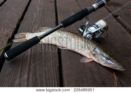 Freshwater Pike And Fishing Equipment Lies On Wooden Background..