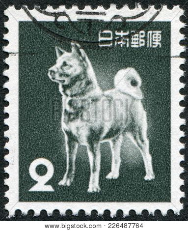 Japan - Circa 1953: A Stamp Printed In Japan, Depicts A Dog Breed Akita Inu, Circa 1953