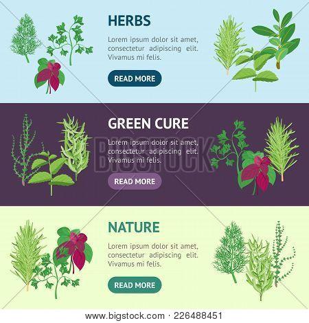 Natural Twig Herb Banner Horizontal Set Dill, Parsley, Basil, Mint, Rosemary, Tarragon, Laurel And T