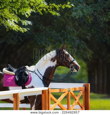 Paint horse with bridle and english saddle against background of summer park.