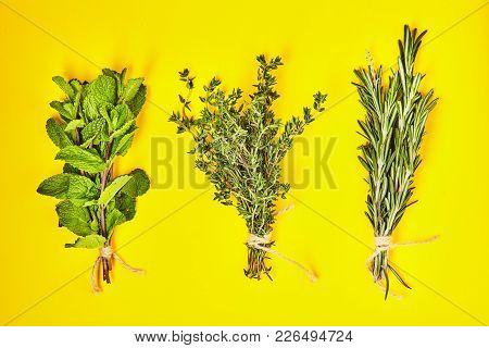 Useful Herbs. Mint. Thyme. Rosemary.  Fragrant. Green. Freshness. For Your Design.