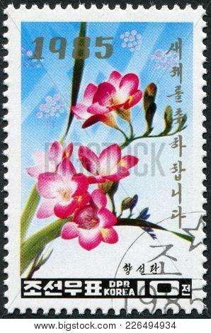 North Korea - Circa 1985: A Stamp Printed In North Korea, Shows A Flower Freesia Refracta, Circa 198