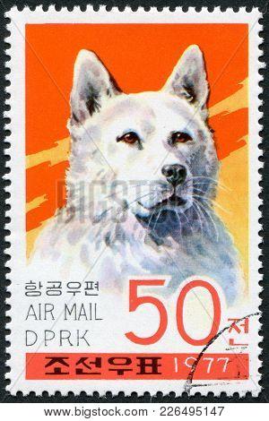 North Korea - Circa 1977: A Stamp Printed In North Korea, Shows A Dog Breed Keeshond, Circa 1977