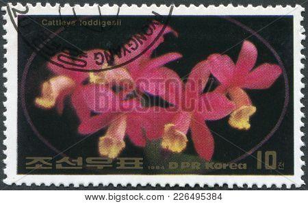 North Korea - Circa 1984: A Stamp Printed In North Korea Shows An Orchid Cattleya Loddigesii, Circa