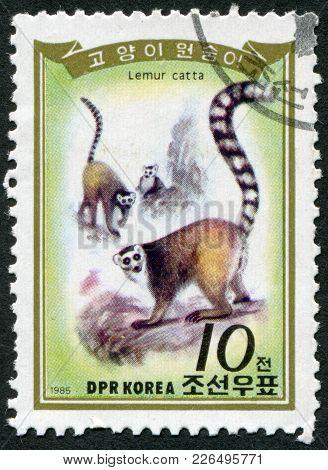 North Korea - Circa 1985: A Stamp Printed In North Korea, Shows The Ring-tailed Lemur (lemur Catta),