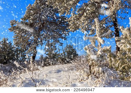 Wonderful Winter Landscape.snow Covered Trees In A Forest Glade. Morning Snowfall