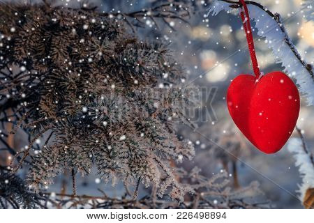 Decorative Velvet Red Heart On Snow-covered Fir Branch. Valentine Day Card. Winter Holiday. Valentin
