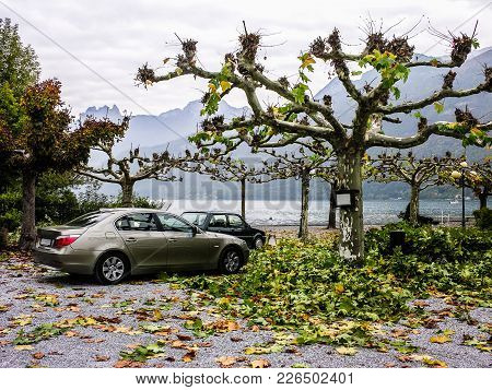 A Beautiful View Of A Sycamore Alley Located Near A Sea Embankment.there Are Two Cars And A Lot Of G