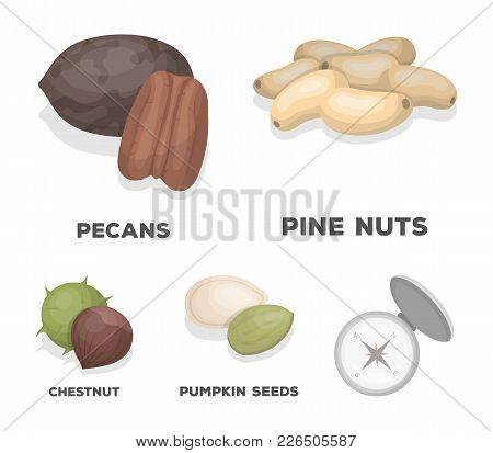 Pecan, Pine Nut, Pumpkin Seeds, Chestnut.different Kinds Of Nuts Set Collection Icons In Cartoon Sty