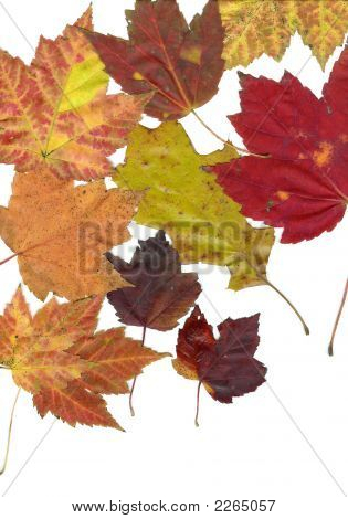 Multiples Leaves 2